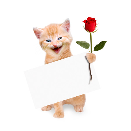 Cat with red rose and banner isolated on white background