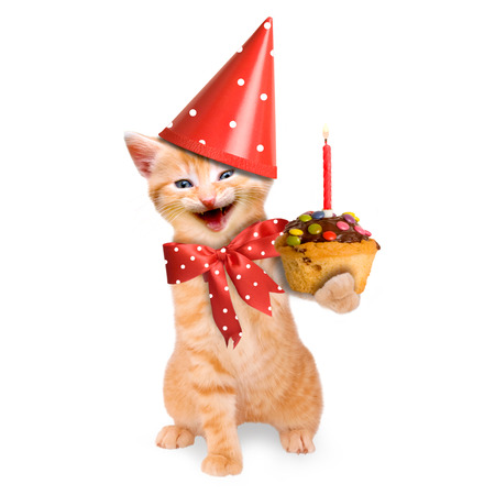 smiling cat   kitten, happy birthday isolated on white background Archivio Fotografico
