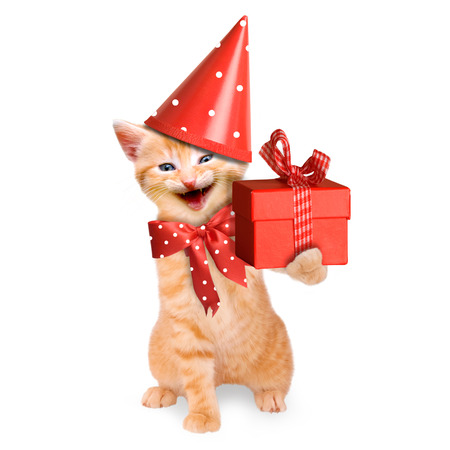 smiling cat   kitten, happy birthday isolated on white background Imagens