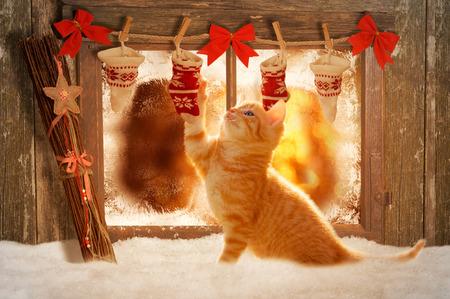 fiatal cica játszik karácsonyi dekoráció