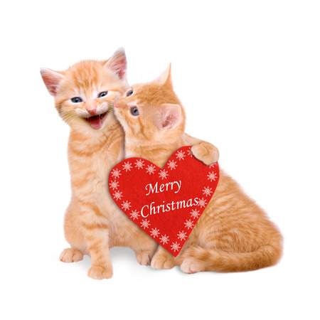 Two cats wishing Merry Christmas isolated on white background
