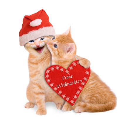 Two cats with Santa hat, wishing Merry Christmas isolated on white background