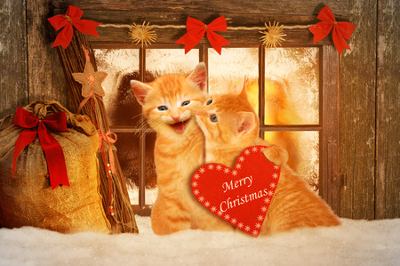 two cats at Christmas sitting on the snow and holding a red heart