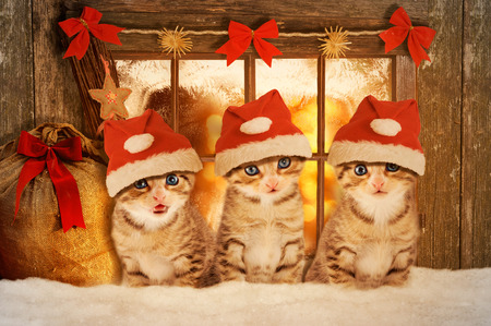 Three kittens at Christmas sitting in front of a mood-lit window.