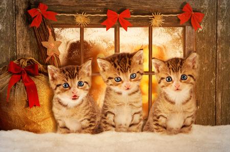 Drie kittens bij Kerstmis zit een stemming verlichte raam.