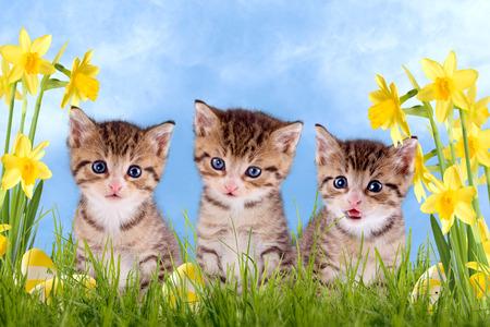 Drie jonge kitten op een groene weide