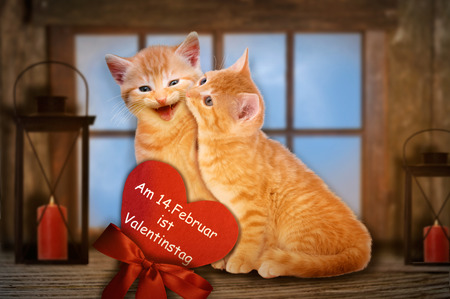 Two enamored cats with red heart kissing in front of window