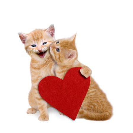 Two enamored cats with red heart on white background