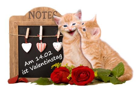 two cats in love Zdjęcie Seryjne