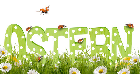 Wooden letters Easter, stand in green meadow flowers and ladybird climbing on the letter Zdjęcie Seryjne