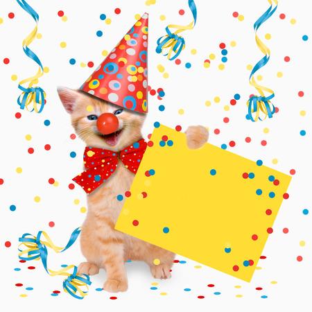 카니발 파티, 고양이, 숙취, 고양이 두 마리는 카니발을 축하 스톡 콘텐츠