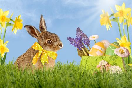Easter bunny with bow sitting in green meadow with blue sky Zdjęcie Seryjne