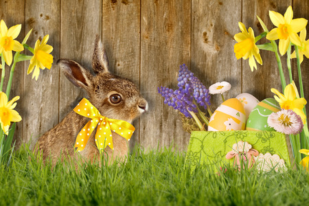 Easter bunny with bow sitting in green meadow against wood background Zdjęcie Seryjne