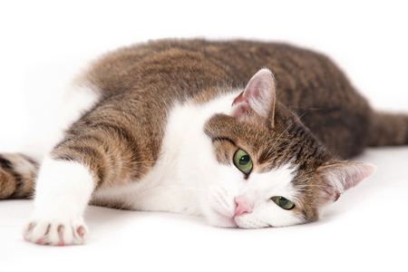 Cat relaxing on a white background