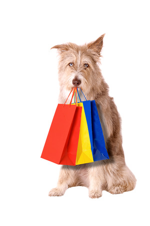Dog with shopping bags isolated on white background Stock Photo