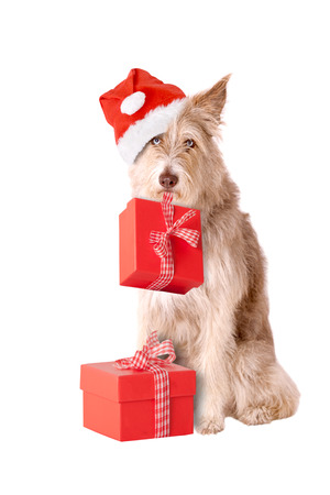 Dog with santa hat and presents isolated on white background