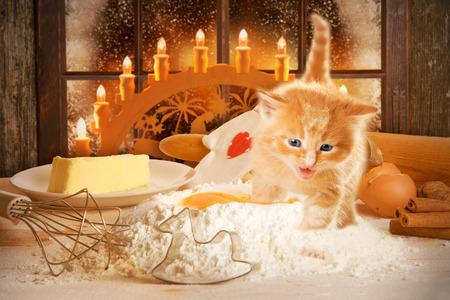 Baking of Christmas cookies with cat Zdjęcie Seryjne - 44161871