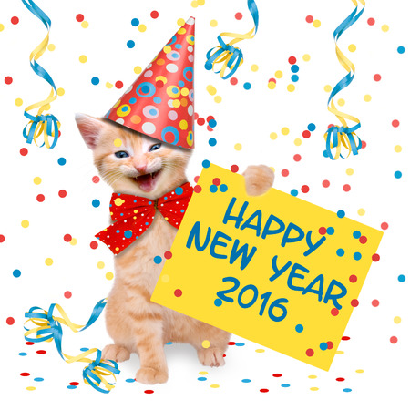 laughing cat with glass of champagne and party hat Happy New Year 2016 Stock Photo - 44161873