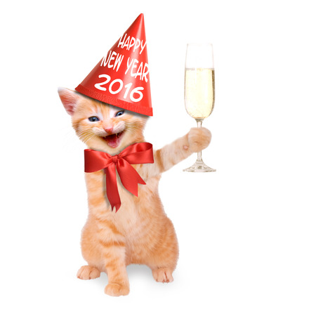 new year party: laughing cat with glass of champagne and party hat Happy New Year 2016