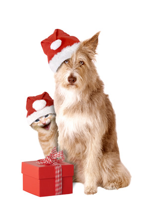 Cat and dog with Santa hat and gift isolated