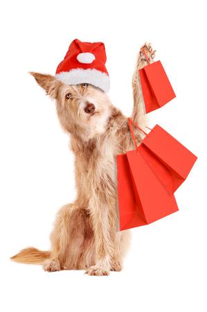Dog with Christmas hat and shopping bags isolated on white background