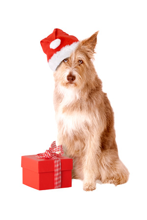 Dog with santa hat and gift isolated on white background Zdjęcie Seryjne - 46288421