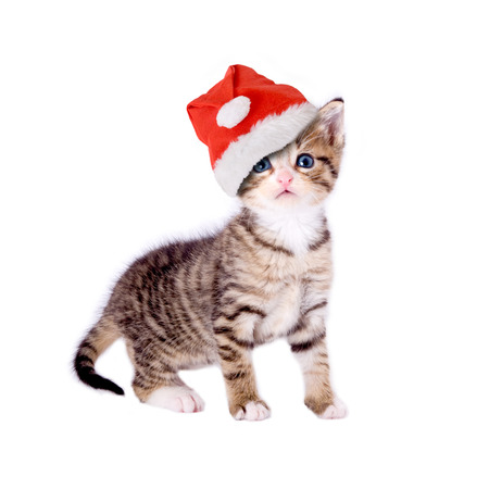 christmas hat: Cat kitten with Christmas hat, isolated on white background Stock Photo