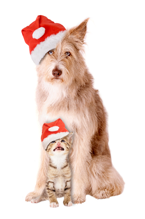 Cat and dog with Santa hat on white background