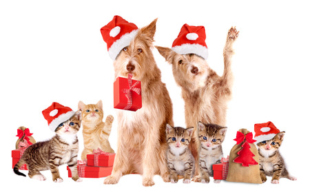 animals and pets: Group Of Animals with Santa hats and presents, isolatet Stock Photo