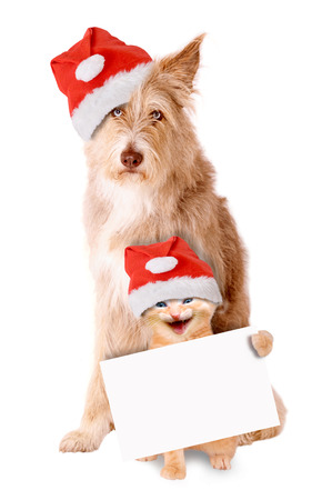 irish christmas: Cat and dog with Santa hat and banner on a white background