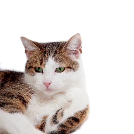 lurk: Cat lying on white background Stock Photo