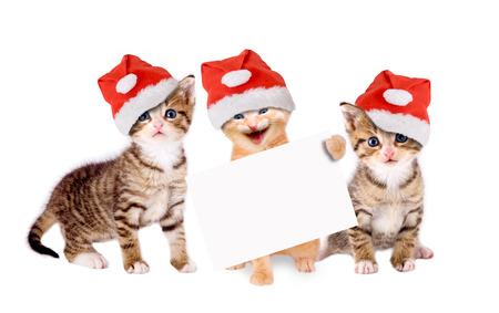 Három fiatal macska karácsonyi kalapot és bannereket elszigetelt