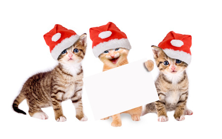 three young cats with Christmas hats and banners isolated Archivio Fotografico