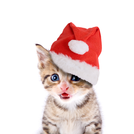 Cat, kitten with Santa hat isolated on white background Zdjęcie Seryjne
