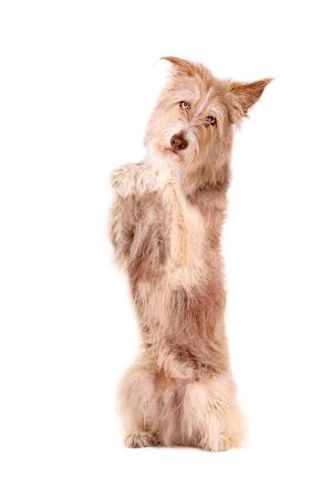 Te gaan zitten en smeken, Hond Stockfoto