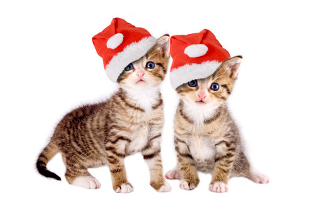 two kittens with Christmas hats isolated on white background