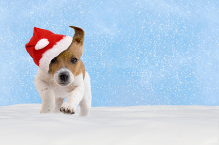 blue christmas background: Dog, puppy, Jack Russel Terrier with santa hat jumping in the snow with blue sky Stock Photo