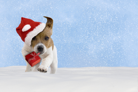 christmas time: Dog, puppy, Jack Russel Terrier with santa hat jumping in the snow with blue sky Stock Photo