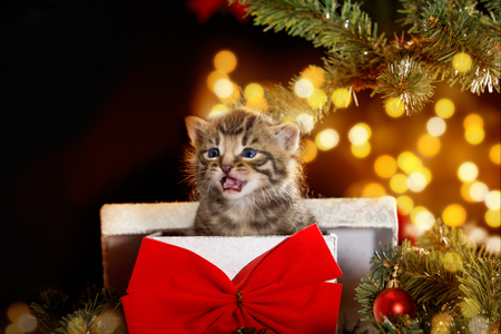 christmas atmosphere: Cat  kitten under the Christmas tree sits in a gift box with red bow Stock Photo