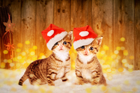 Two little kittens sitting in the snow with Christmas decorations