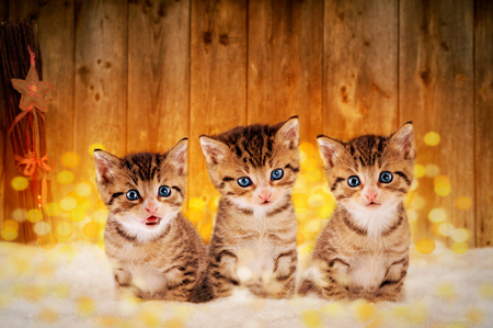 Three little kittens sitting in the snow with Christmas decorations Zdjęcie Seryjne - 50055039