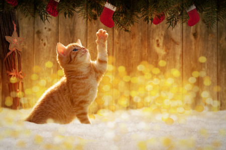 Small kitten sitting in the snow with Christmas decorations