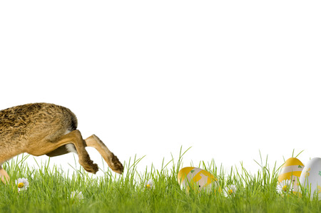 Rabbit, Easter bunny running over a green meadow flowers, isolated on white background