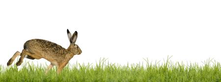 huevos de pascua: conejo de Pascua conejo corriendo por la pradera Foto de archivo