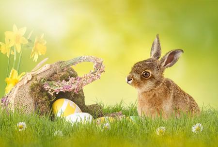 huevos de pascua: Pascua, Conejo de Pascua sentado en el prado verde