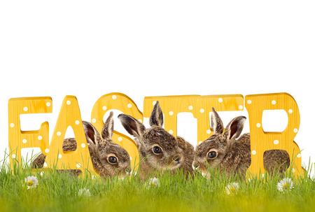 huevos de pascua: Pascua, tres conejos de Pascua sentado en la pradera