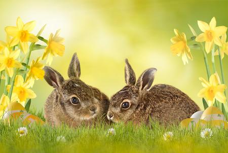 osterei: Ostern, Easter Bunny auf gr�nen Wiese sitzt