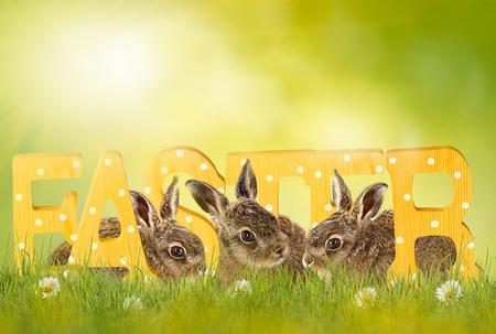 Húsvét, húsvéti nyuszi ül a zöld rét Stock fotó