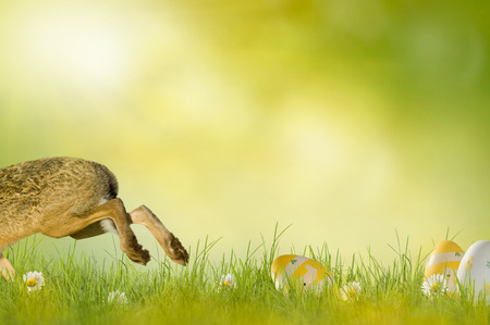 Bunny, easter bunny running over a green flower meadow