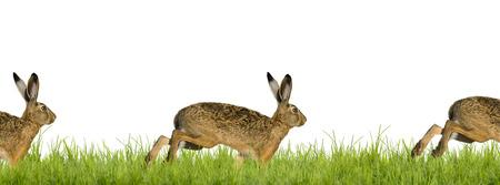 huevos de pascua: Easter bunny rabbit running across meadow